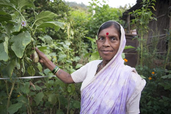 Kitchen Gardens supported for individual households